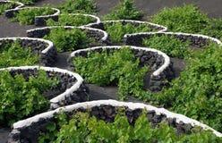 Hiszpania, wyspy kanaryjska, Lanzarote, losu angeles Geria winnica fotografia royalty free