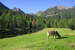 Hiszpanii krajobrazu Zdjęcia Royalty Free
