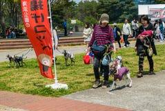 Hitachi nadmorski park Obrazy Royalty Free