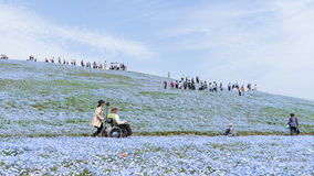HITACHI SEASIDE PARK,JAPAN - APR 16,2016: Tourists enjoying the Stock Images