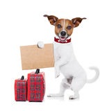 Hitchhiker dog Royalty Free Stock Photo