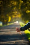 Hitchhikers hand trying to stop a car on the autumn road Stock Photos