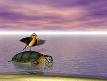 Hitchin' A Ride. Talkitive bird riding on the back of a turtle Royalty Free Stock Photo
