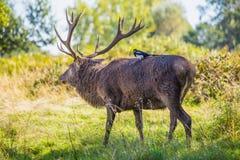 Hitching een rit in het bos royalty-vrije stock foto