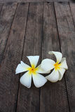 Hite and yellow frangipani flowers Royalty Free Stock Photo