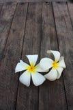 Hite and yellow frangipani flowers royalty free stock photo