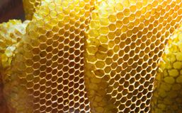 Hive. A closeup view of honeycombs stock image