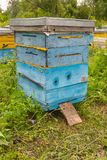 A vertical plan of a hive stock photo