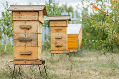 Hive in the apiary. Wooden hive in the apiary Stock Images