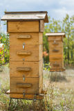 Hive in the apiary. Wooden hive in the apiary Royalty Free Stock Images