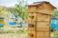 Hive in the apiary. Wooden hive in the apiary Royalty Free Stock Image