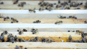 Hive with bees. stock video footage