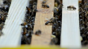 Hive with bees. stock footage