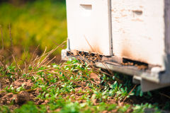 Hive by the bees closeup Royalty Free Stock Photos