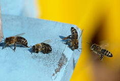 Hive and bees, spring clean Royalty Free Stock Photography
