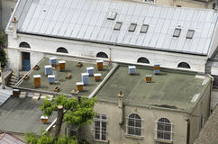 Hive in the city. In the city center of Paris can be found on the roof of some houses, farms bees Royalty Free Stock Images