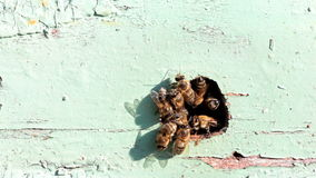 Hive entrance stock video