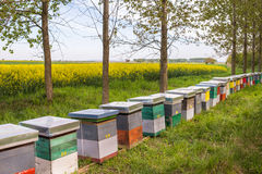 Hive in a field Royalty Free Stock Image