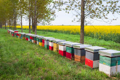 Hive in a field Stock Images