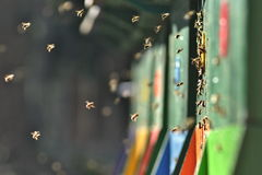 Hive and flying bees in a fresh spring light Royalty Free Stock Images