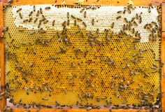 Hive frame with bees, honey and pollen Stock Images