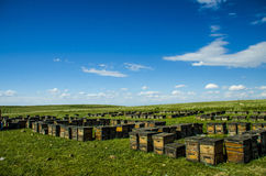 Hive on the lawn Royalty Free Stock Images