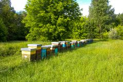 Hive in a meadow. Bees in hives produce sweet honey Royalty Free Stock Photography