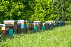 Hive in a meadow. Bees in hives produce sweet honey Royalty Free Stock Images