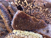 Hive Stock Photography