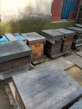 A hive,Wild, farm beekeeping sites. There are bees flying stock photography