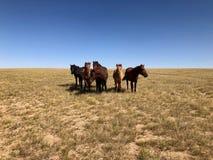 Hiver à l'Inner Mongolia image libre de droits