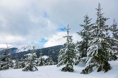 Hiver avec la neige dans les montagnes géantes, République Tchèque Image stock