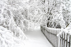 Hiver avec la neige sur des arbres Photos libres de droits