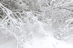 Hiver avec la neige sur des arbres Images stock