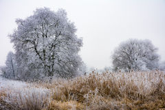 Hiver brumeux scénique avec les arbres givrés Image libre de droits