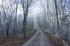 Hiver décembre de forêt de gel de route Photographie stock libre de droits