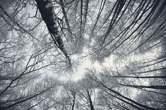 Hiver dans la forêt photo libre de droits