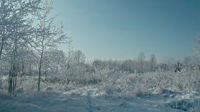 Hiver dans les détails Horizontal gelé de l'hiver clips vidéos