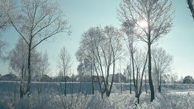 Hiver dans les détails Horizontal gelé de l'hiver banque de vidéos
