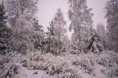 Hiver dans les forêts norvégiennes Photographie stock libre de droits