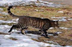 Hiver de chat tigré Photographie stock libre de droits