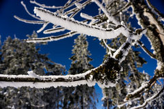 Hiver de forêt Photos libres de droits