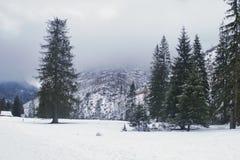 Hiver de Milou dans le Tatras photographie stock libre de droits