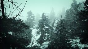 Hiver de montagnes la nature Slovaquie de brouillard banque de vidéos