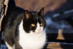Hiver de village de chat photographie stock