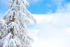 Hiver en bois de neige de ciel d'arbre Photos libres de droits