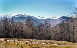 Hiver en montagnes de Ciucas, Roumanie Photo stock