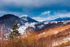 hiver en parc naturel national d'Uzhanian photographie stock