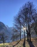 Hiver ensoleillé avec le ciel bleu et les arbres sans feuilles de forêt avec l'herbe verte image stock