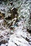 Hiver et paysage de neige au bâti Rainier National Park, paradis Photo stock